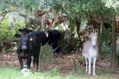 01-Bevin Hunter Lane Homesite, Lithia FL