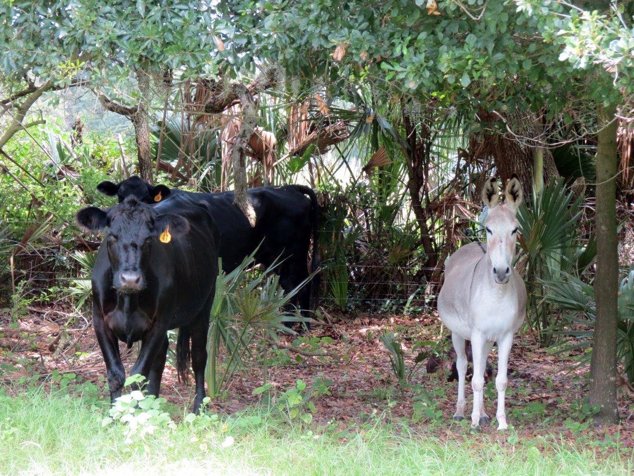 Bevin Hunter Lane Homesite 4.9 Acres in Lithia, FL
