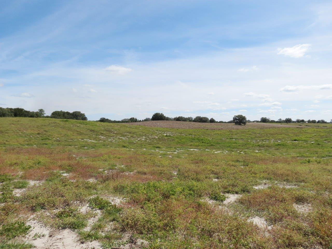 Duck Lake Canal Road 30 Acres Homesite & Farm in Dade City, FL