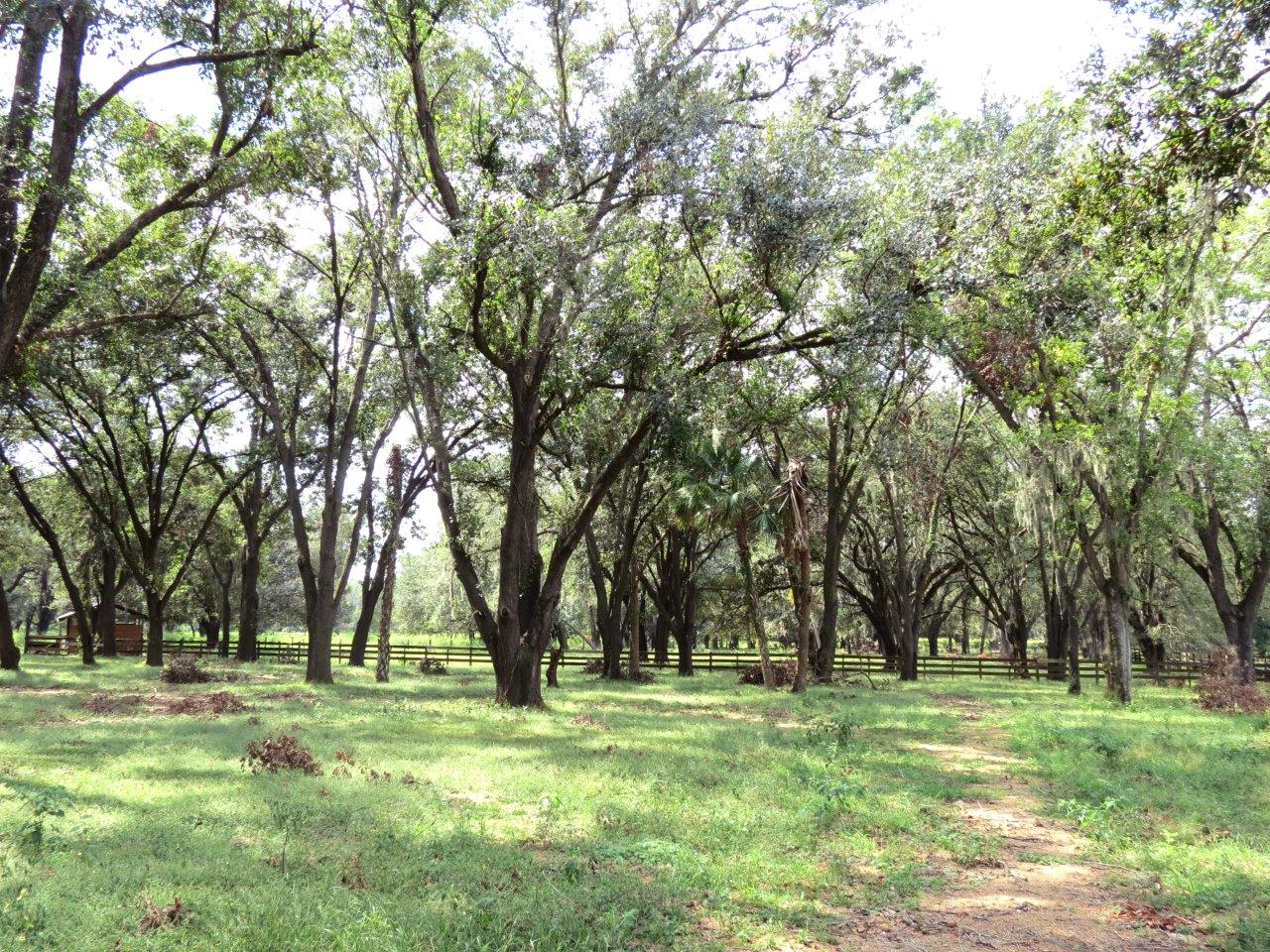 Hidden Hammock Homesite & Horse Farm 20 Acres in Dover, FL