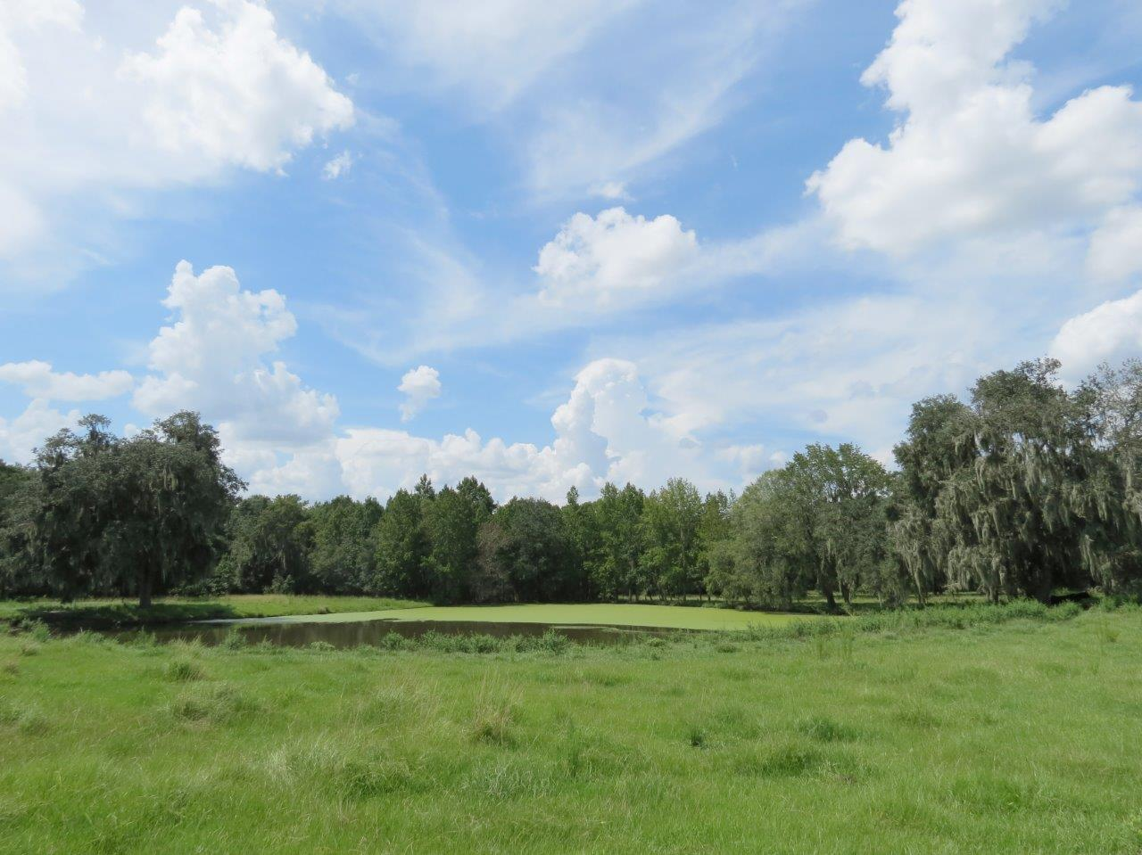 Southwood Oaks Homesite & Pasture 47 Acres in Lithia, FL