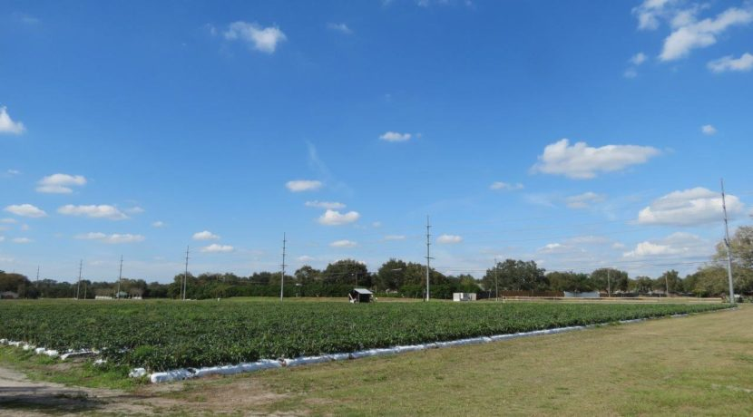 02-Trapnell Rd Homesite Lots 1 AC