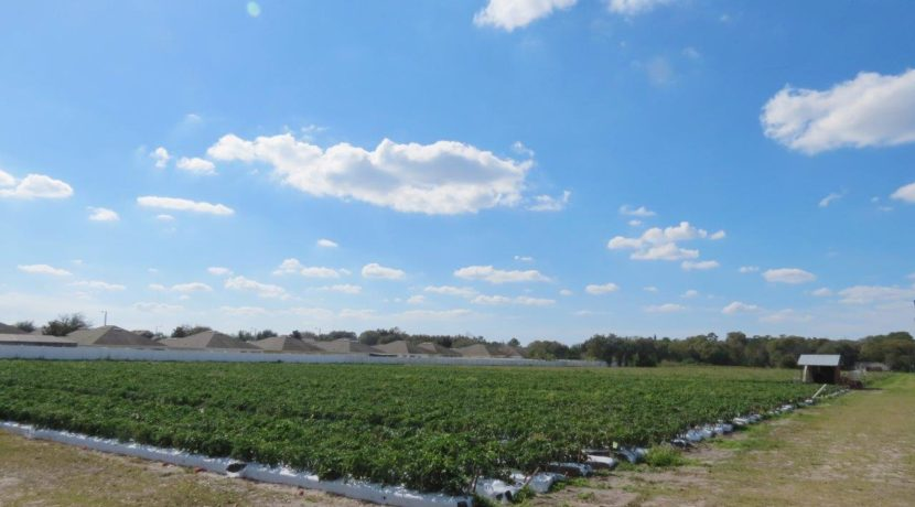 03-Trapnell Rd Homesite Lots 1 AC