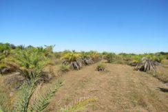 04-Linda Sweat Trail Homesite 10 AC.