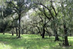05-Southwood Oaks Homesite Pasture 47 AC