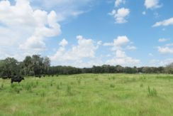 06-Southwood Oaks Homesite Pasture 47 AC