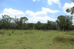 02-Summer Creek 20 Acres.