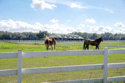 03-55 Acre Equestrian Estate.