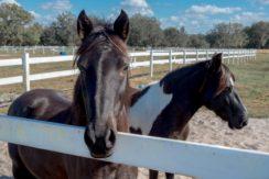 06-55 Acre Equestrian Estate.
