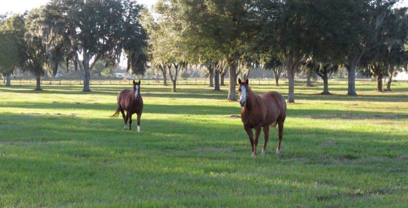 Browning Road 5 Acre Estate Homesite in Lithia, FL