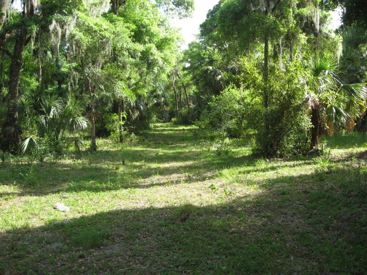 Brantley Road 5 Acre LOT 1 in Lithia, Florida