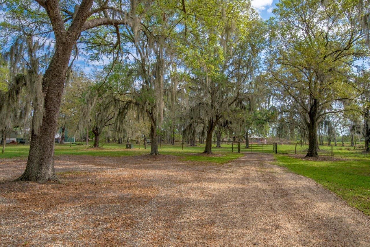 Rogers Ranch 37 Acres In Lithia Florida Fischbach Land