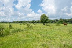 Brantley Reserve_8.5 Acres-4