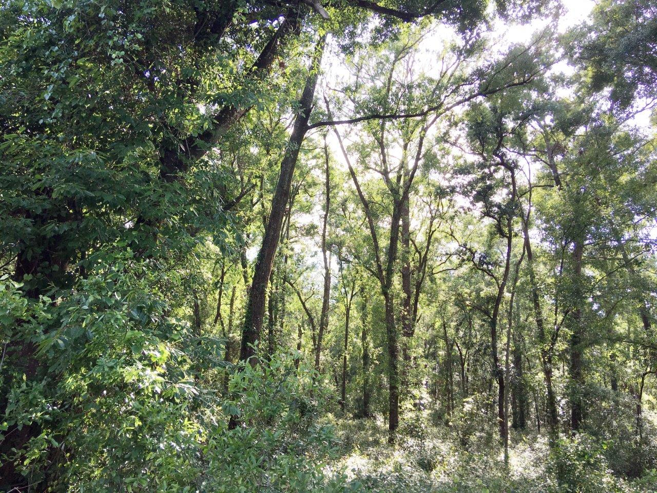 Old Lakeland Hwy 11 Acres in Dade City, FL