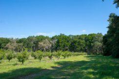 02-Organic Farm Homesite-Plant City