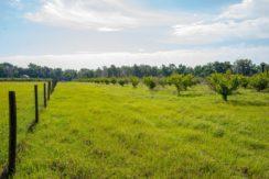 04-Organic Farm Homesite-Plant City