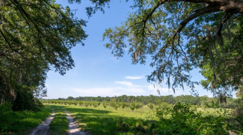 06-Organic Farm Homesite-Plant City