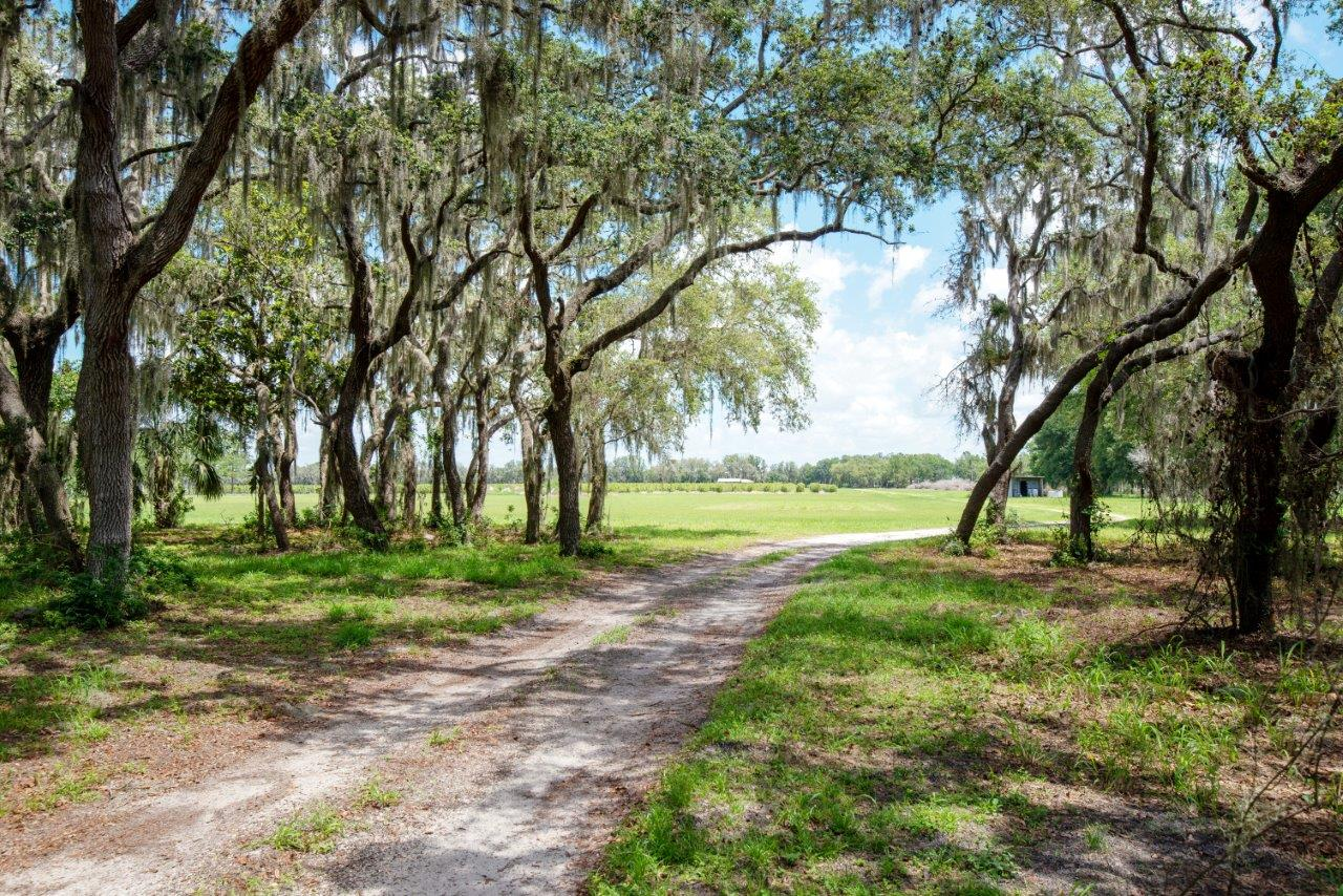 Gentlemen's Ranch & Blueberry Farm 152 Acres in Duette, FL