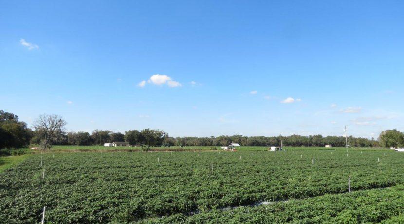 01-McIntosh Rd Farm Homesite.