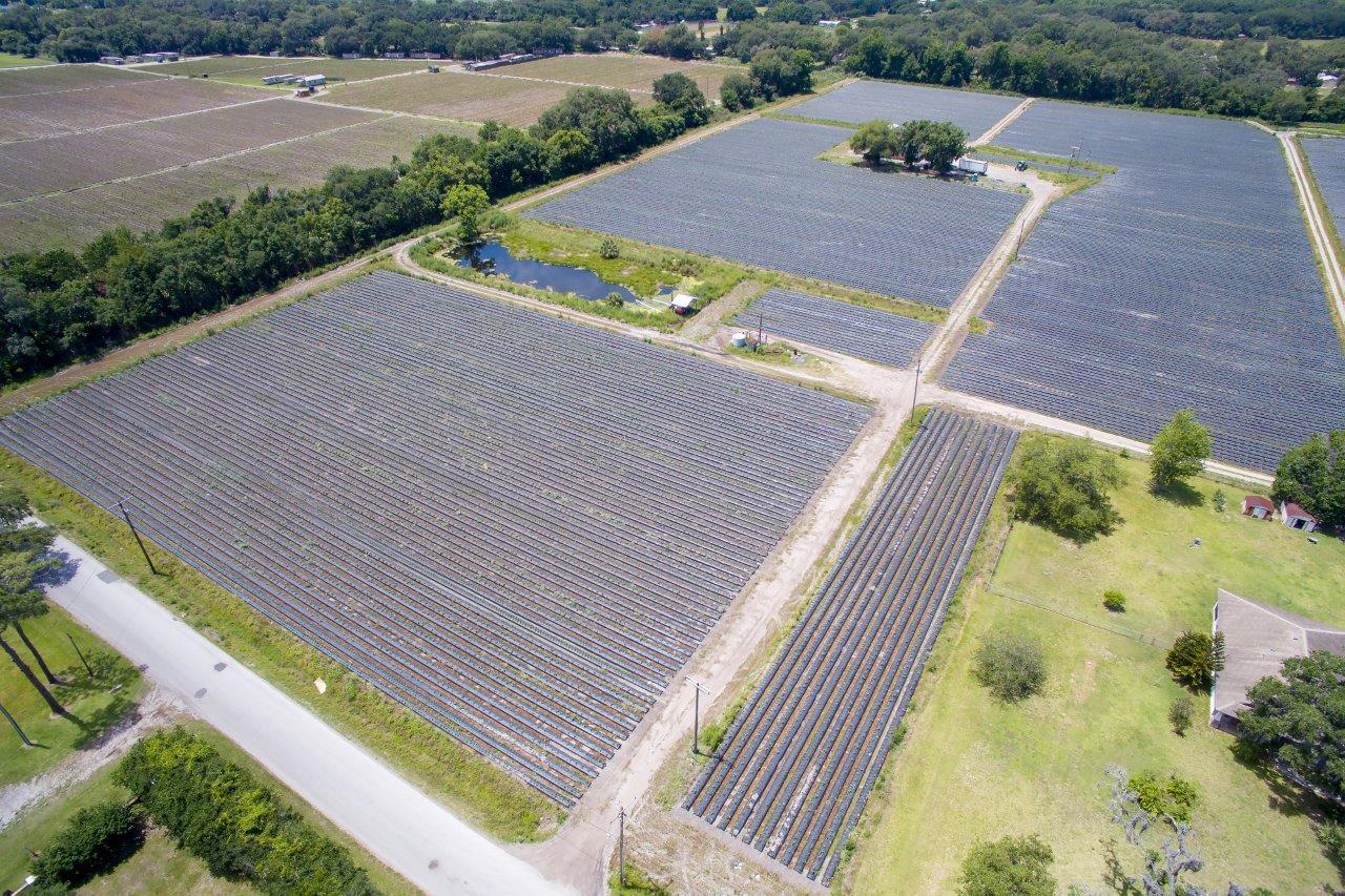 McIntosh Road Farm Homesite 20 Acres in Dover, Florida