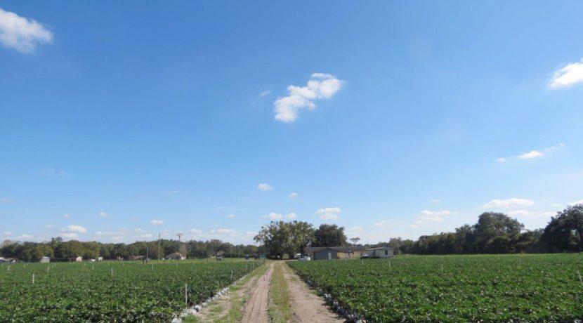 05-McIntosh Rd Farm Homesite.