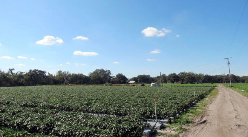 06-McIntosh Rd Farm Homesite.
