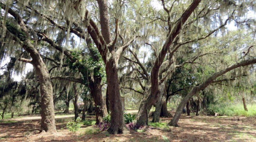 01-Manatee Preserve Grove 70 AC