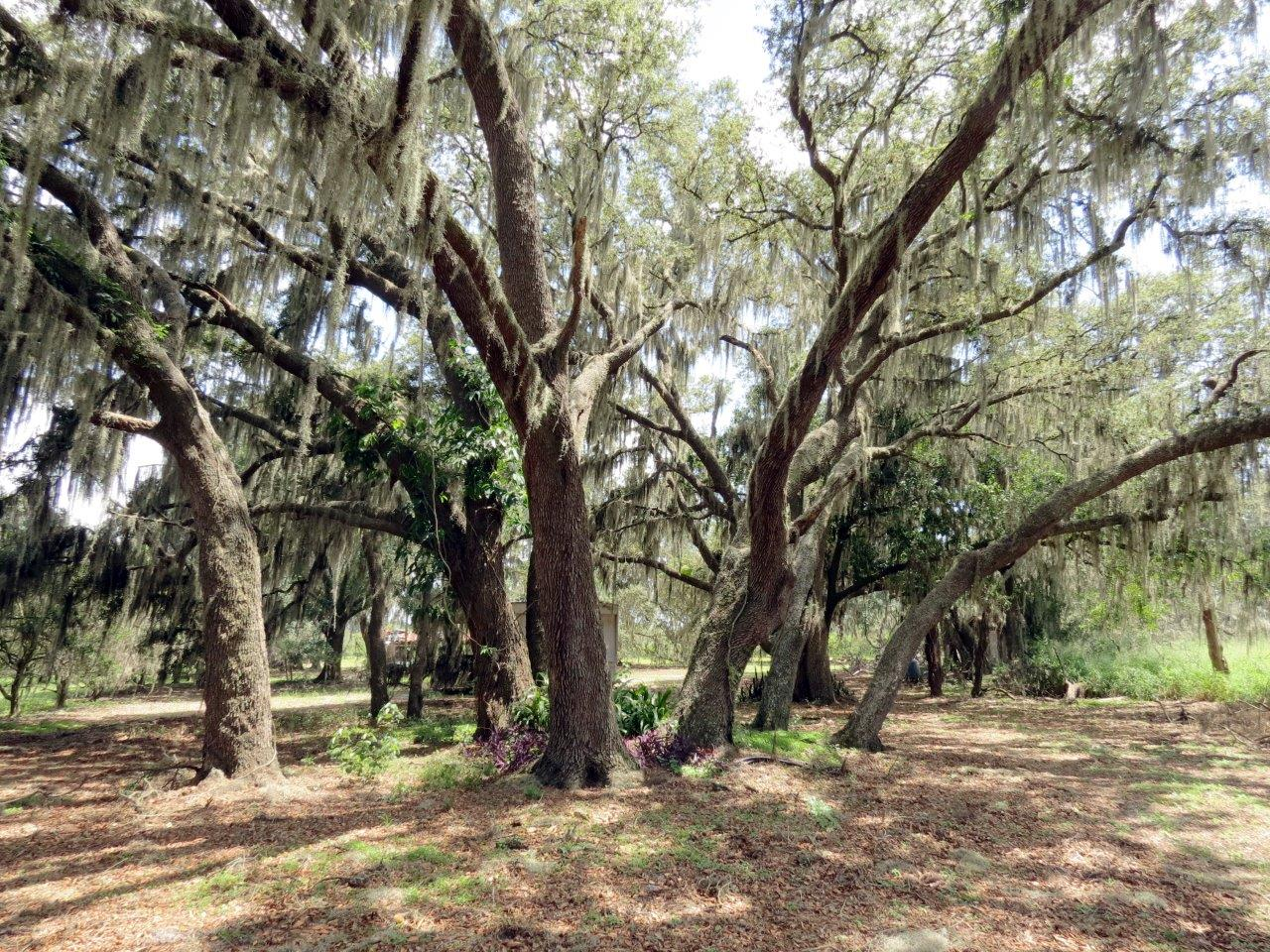 Manatee Preserve Grove & Retreat 70 Acres in Duette, Florida