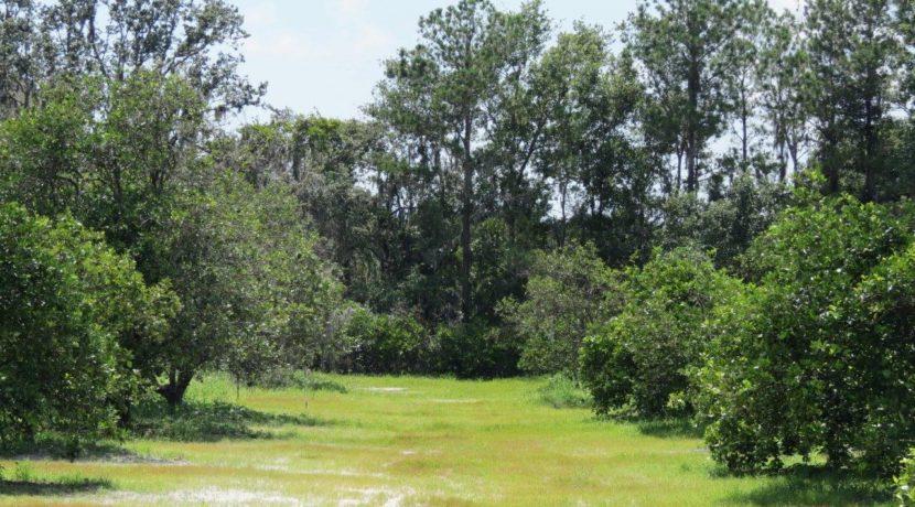 02-Manatee Preserve Grove 70 AC