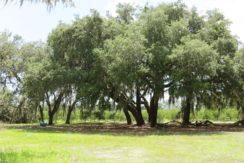03-Manatee Preserve Grove 70 AC