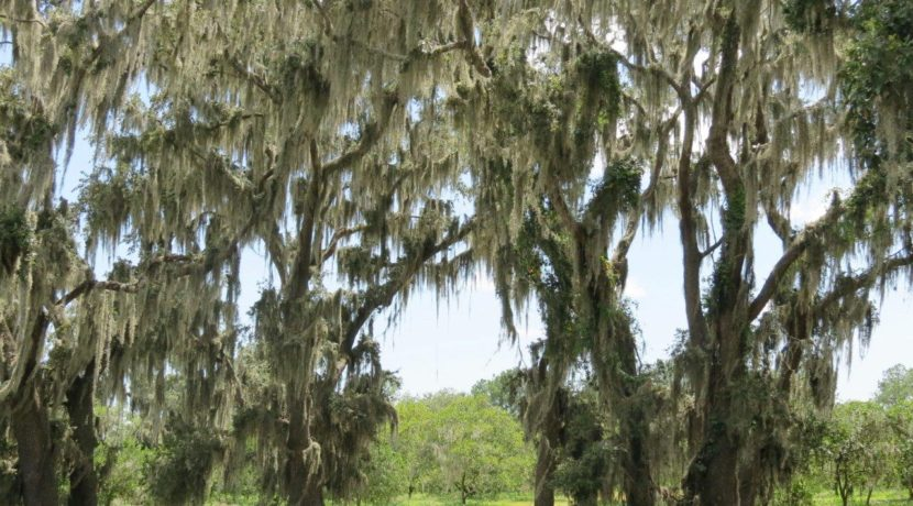 04-Manatee Preserve Grove 70 AC