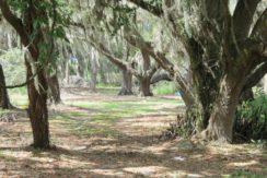 05-Manatee Preserve Grove 70 AC