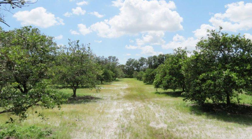 06-Manatee Preserve Grove 70 AC