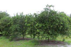07-Manatee Preserve Grove 70 AC