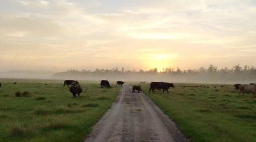 01-Davis Ranch Hardee Co