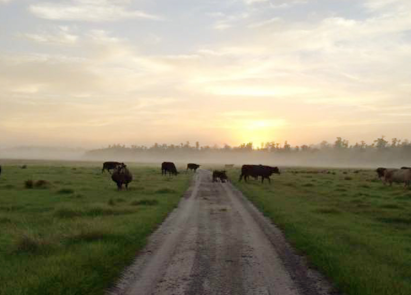 Davis Ranch in Hardee County