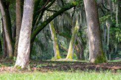 05-Secluded Old FL Getaway Estate