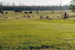06-Davis Ranch Hardee Co