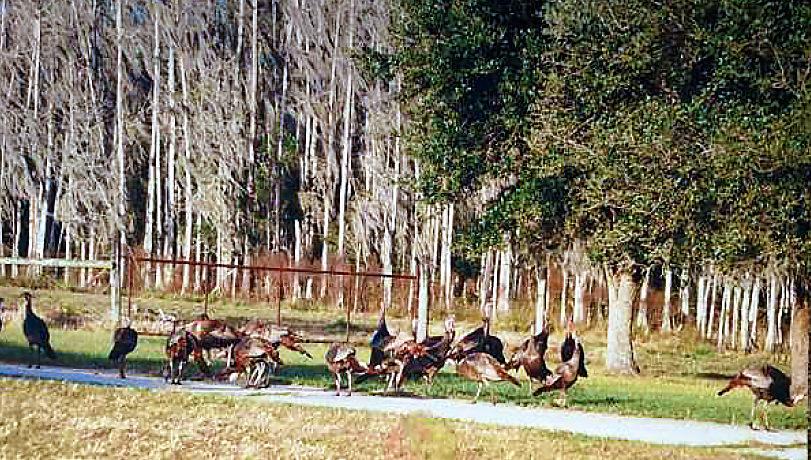 08-Davis Ranch Hardee Co