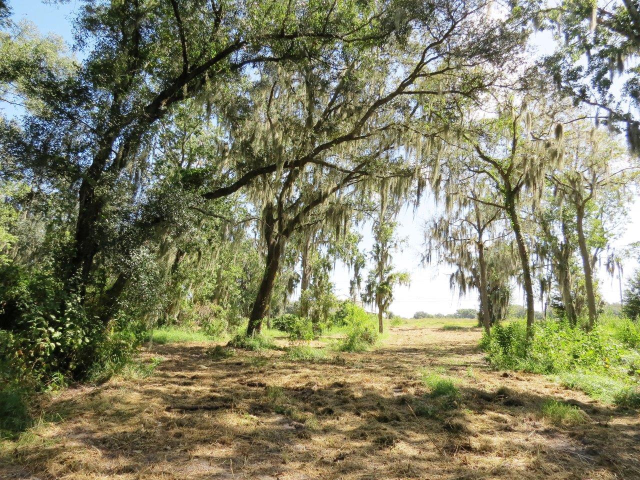 Wooded Wimauma Homesite 4.5 +/- Acres in Wimauma, FL