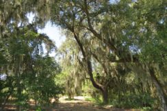 03-Wooded Wumauma Homesite