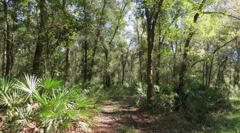 04-Secluded Wooded Homesite