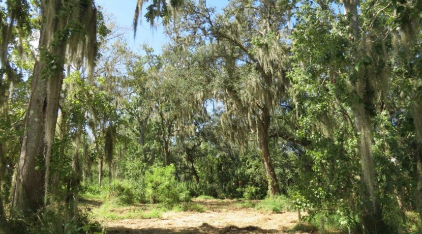 06-Wooded Wumauma Homesite
