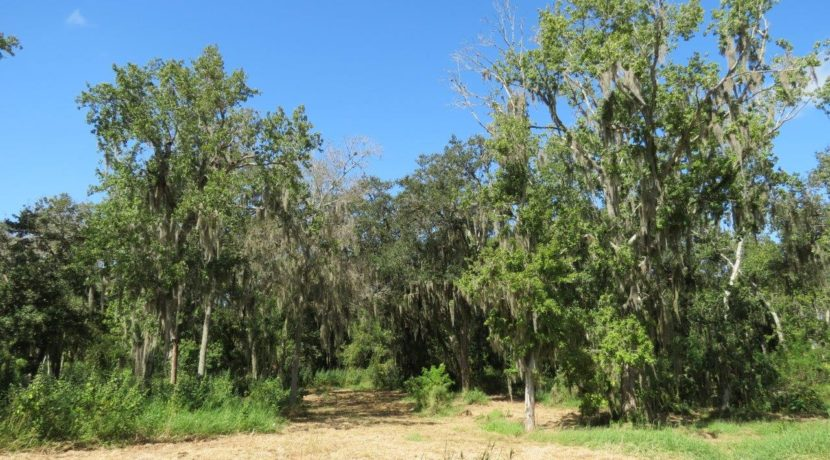 08-Wooded Wumauma Homesite