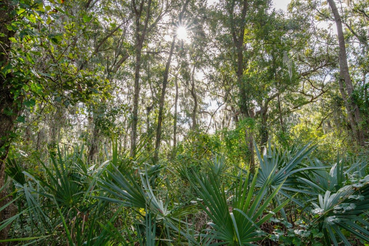 Hidden Canopy Homesite 4.45 Acres in Lithia, FL