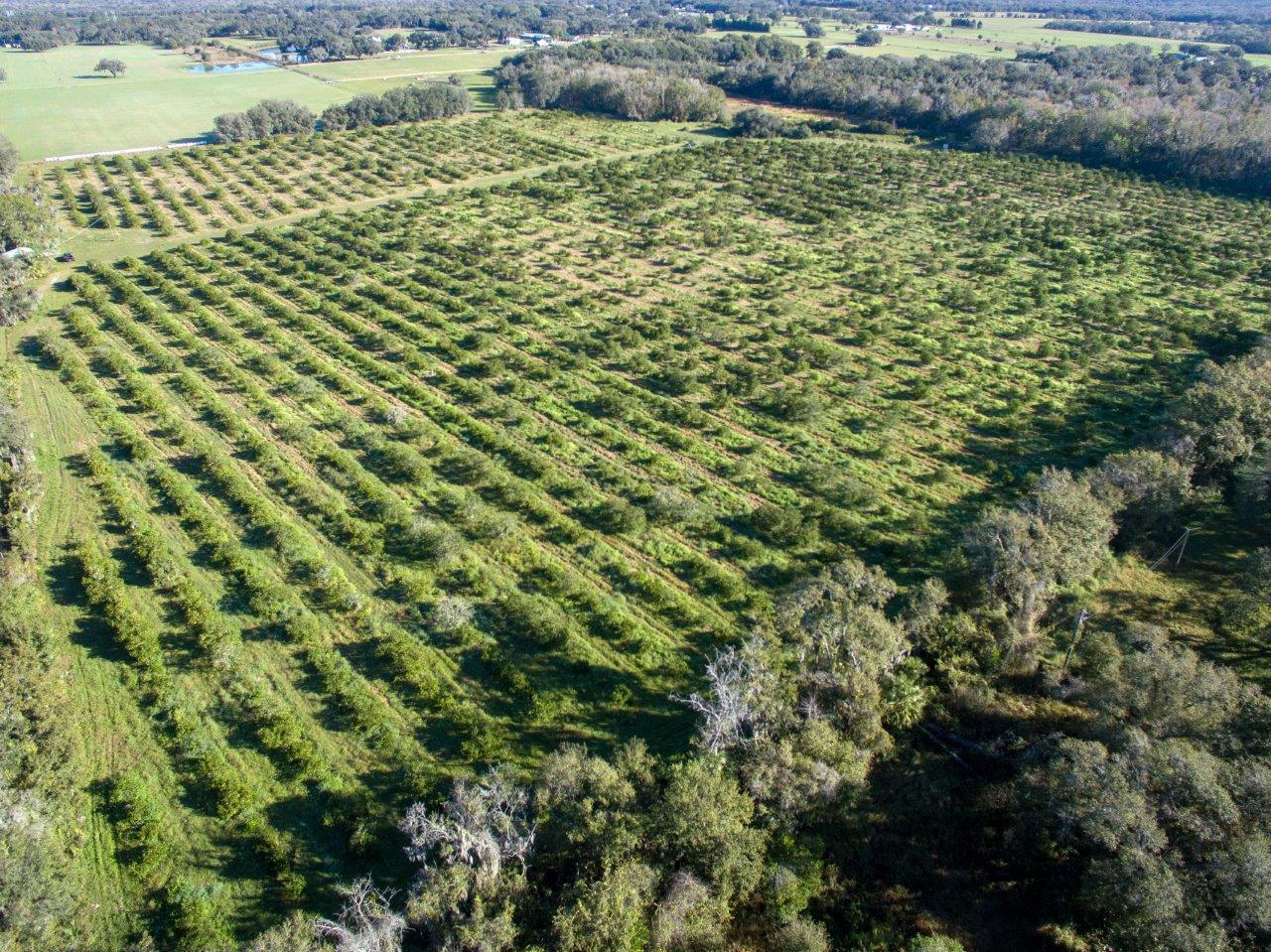 Private 20 to 41 Acre Estate in Lithia, FL